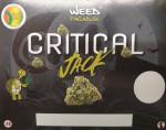 Critical Jack (CBD -0,2% THC)