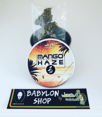 Mango Haze (CBD -0,2% THC - Indoor)